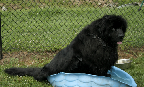 Digby! will get a new pool if you use our Live 360 discount code!